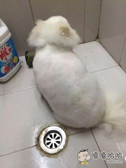 你走!我没你这么胖的狗!