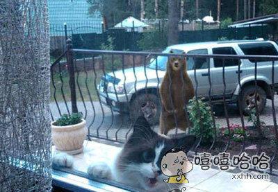 有只熊在后面,赶紧开门啊,快让我进去!