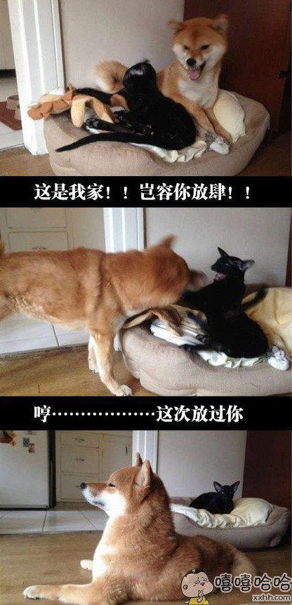 好狗不与猫斗!