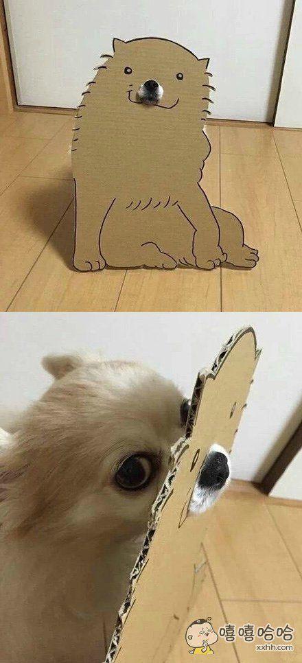 如果你是那条狗你还笑得出来吗?看到狗狗那怨恨的眼神要笑岔气了…