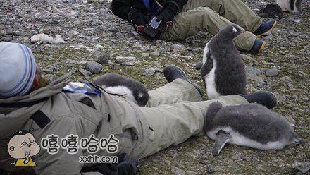 南极条约规定人类不得接触野生动物