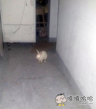 这只兔子要成精