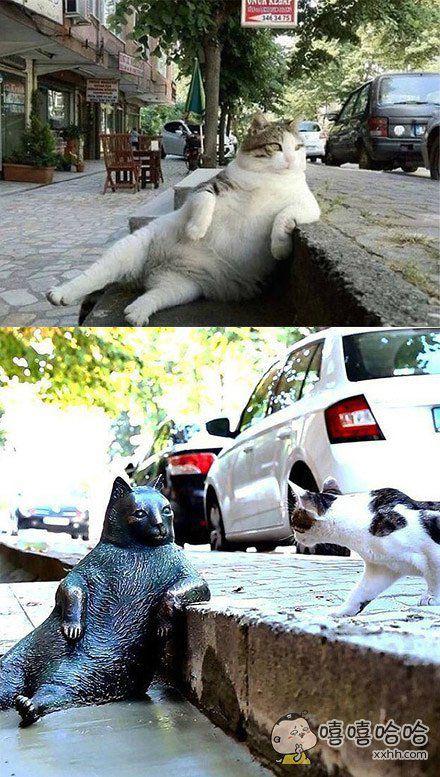在伊斯坦布尔有一只经常把爪子搭在路边思考猫生的喵星人,由于姿势优雅长相好看迅速变成了网红。令人难过的是8。1日去世了。