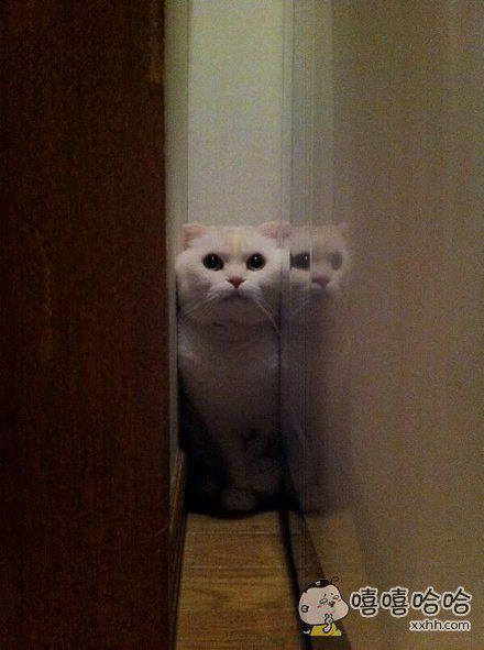 一位网友和朋友在家中聚会完后发现家中的猫咪不见了,最后发现他是因为脸太大卡在墙里了