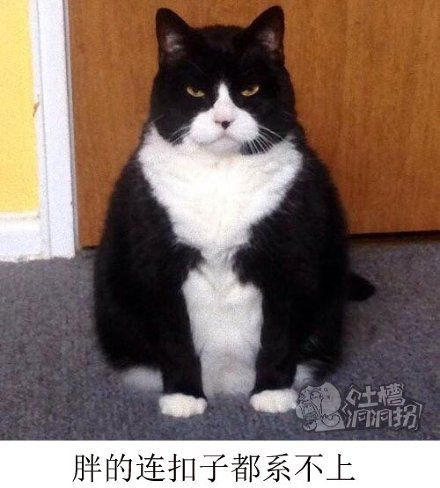看什么看,老子是虚胖