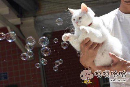 朕也来感受下泡泡的世界~
