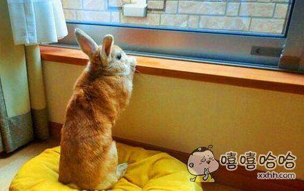 有一只小兔子很喜欢把小脑袋搁在窗边,看远处的风景,它每次一看就是一阵子!感觉是个有故事的小兔砸啊~