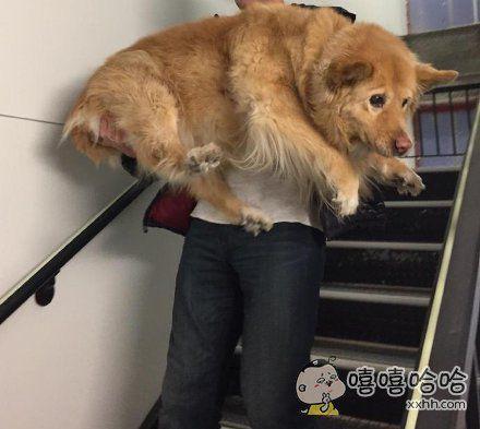 火灾演习中,小哥先得把受惊吓的狗狗救出去。个头这么大,胆子还这么小!