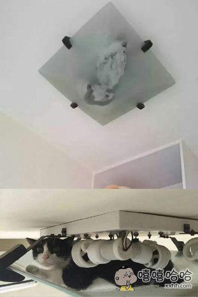 主人发现家里的猫不见了,抬头一看……陛下,你咋上去的