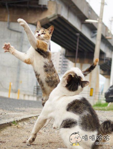 一记左勾拳右勾拳,惹毛我的猫有危险