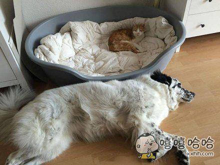 主人你看他啦!又抢我的床!