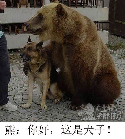 熊:你好,这是犬子
