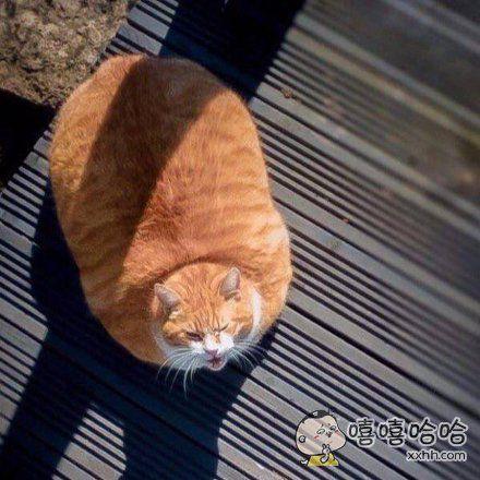 分享一张猫饼