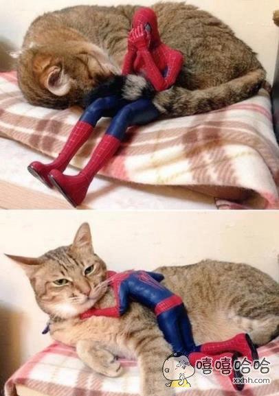 好娇羞的蜘蛛侠