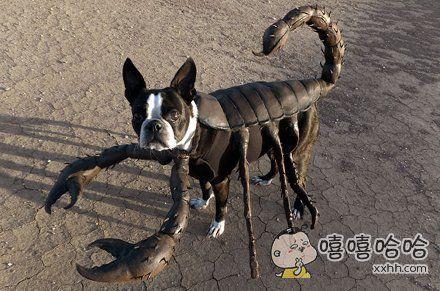 当狗狗穿上了衣服,画风立刻就变了