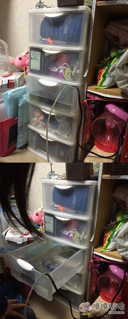 日本网友发现妹妹在房间抽屉里养鱼,隐藏得好深