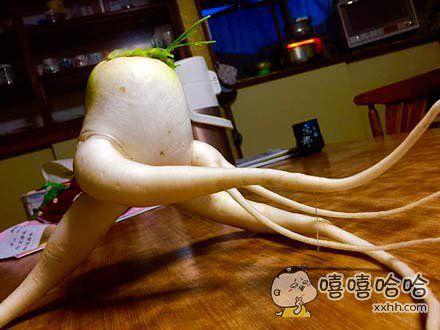 家里的大萝卜拔得有点晚,已经得道成仙了