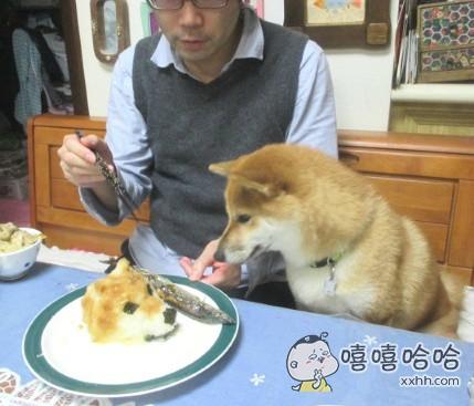 为了让家里的狗狗不再偷吃东西,主人精心准备了一份午餐
