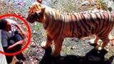 被录像的8起动物袭击人事件