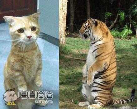 猫科动物就要有猫科动物的样子