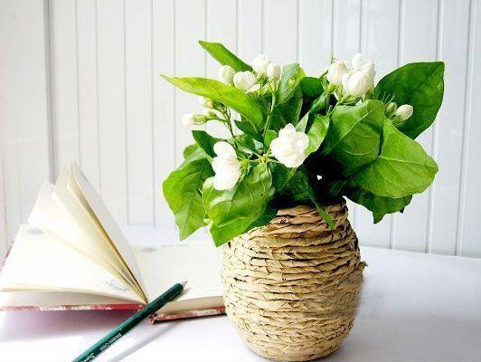 花的素材含【简介,花语和部分花的传说】