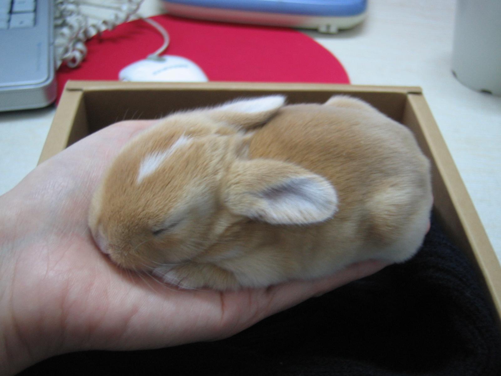 【倾儿】刚出生的可爱小动物