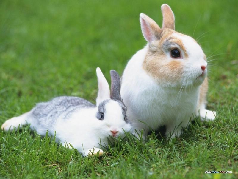 可爱小白兔萌图