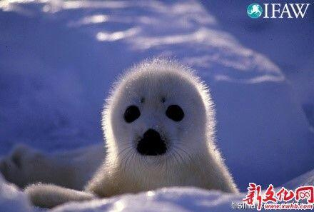 【转】刚出生的小动物萌萌哒