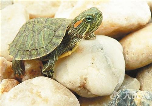 爱乌龟的都来呀,可爱萌龟图