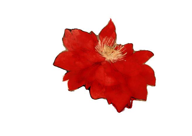 古风免抠花朵素材内容|古风免抠花朵素材版面设计