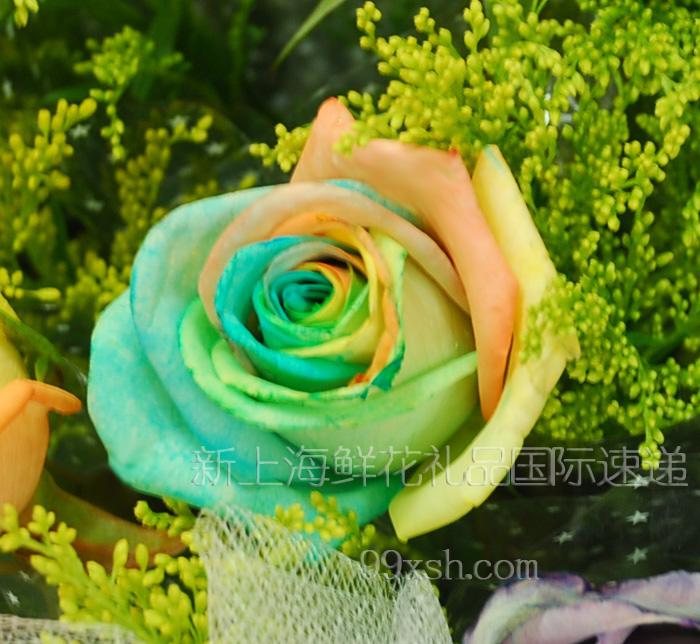 彩色玫瑰花语