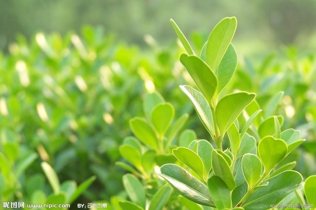 背景 壁纸 绿色 绿叶 树叶 植物 桌面 1024_682