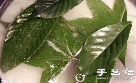 2,将树叶放在碱水中煮上一会儿.