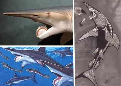 【小鱼儿】那些史前的灭绝动物