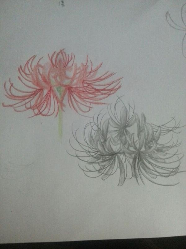 徒弟说要学画彼岸花便画了个彩铅和铅芯笔的然而是不