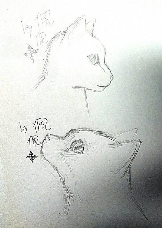 素描画猫的步骤