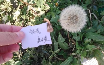 种花很美,它叫勿忘我图片