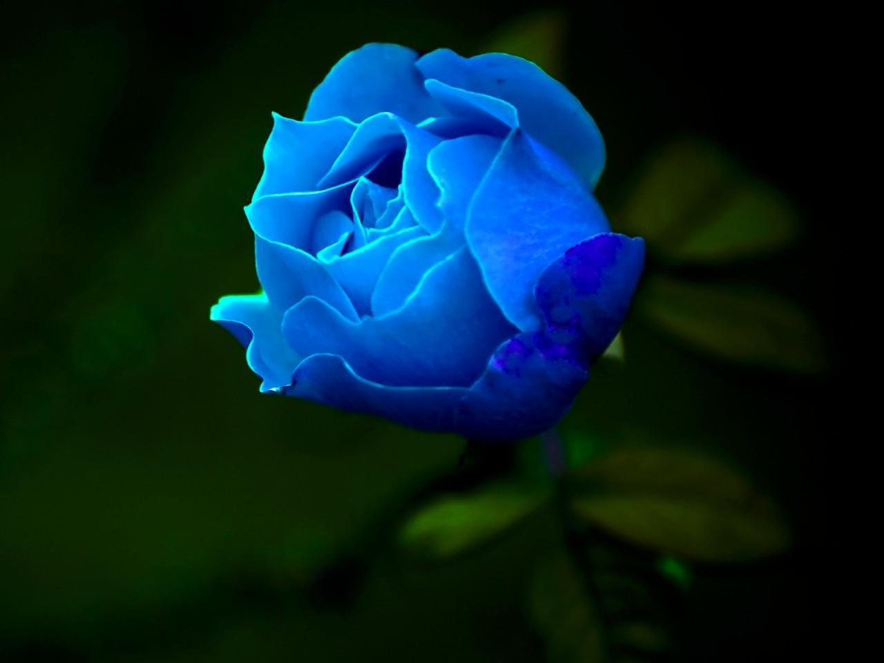 蓝漠的花夏沫篇的图片
